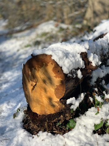 Sherfield Snow